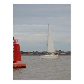 Yacht-Schwertwal Postkarte