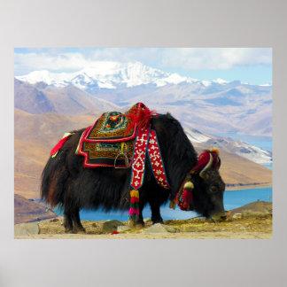 YakBos Grunniens nahe Yamdrok See Tibet Plakatdrucke
