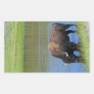 Yellowstone-Büffel-Andenken Rechteckiger Aufkleber