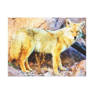 Yellowstone-Kojote Leinwanddruck