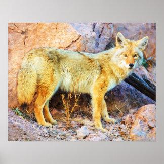 Yellowstone-Kojote Poster
