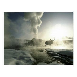 Yellowstone Nationalpark USA, Wyoming. Postkarte
