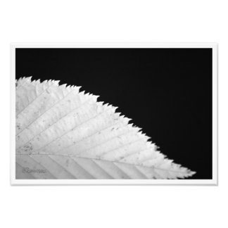 Ying Yang Blatt Fotodruck