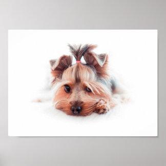 """Yorkie Hund 11"""" x 8,5"""", Wert-Plakat-Papier (Matt) Poster"""