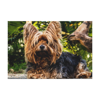 Yorkie HundeLeinwand Leinwanddruck