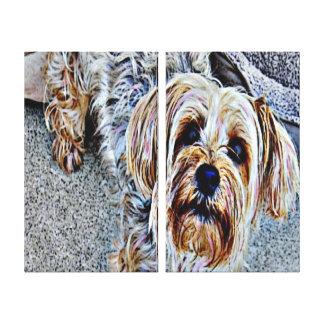 Yorkie Yorkshire Terrier gefärbt Leinwanddruck