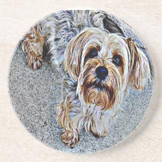 Yorkie Yorkshire Terrier gefärbt Sandstein Untersetzer