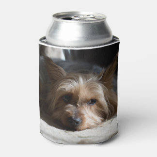 Yorkshire/seidiges Terrier machen ein und füllen Dosenkühler
