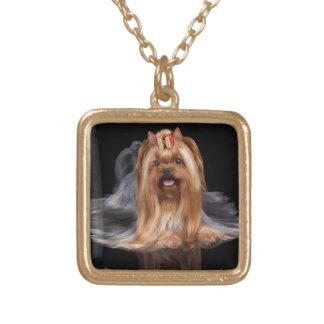 Yorkshire Terrier auf Schwarzem Vergoldete Kette