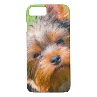 Yorkshire Terrier, das oben schaut iPhone 8/7 Hülle
