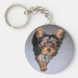 Yorkshire-Terrier puppy.png Schlüsselanhänger
