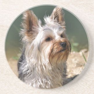 Yorkshire Terrier Sandstein Untersetzer