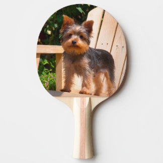 Yorkshire-Terrier stehend auf hölzernem Stuhl Tischtennis Schläger