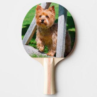 Yorkshire-Terrier stehend in einem Lastwagenrad Tischtennis Schläger