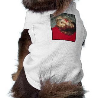 Yorkshire Terrier Top