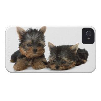 Yorkshire-Terrier verfolgt mutigen Kasten des nied iPhone 4 Hüllen