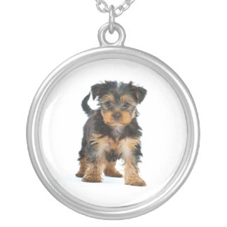 Yorkshire-Terrier Versilberte Kette