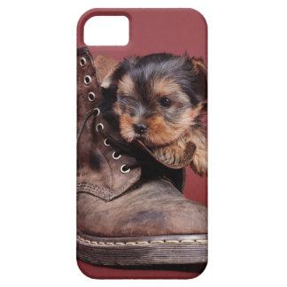 Yorkshire-Terrierhundewelpe iPhone 5 Schutzhülle