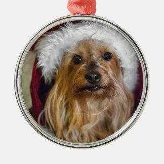 Yorkshire (yorkie)/seidiges Terrier-Verzierung Silbernes Ornament