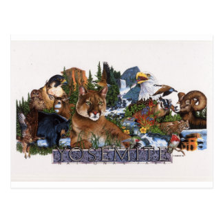 Yosemite-wild lebende Tiere Postkarte
