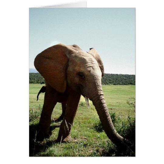 young elephant karte