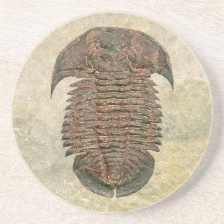 Yuepingia Fossil Trilobite Sandstein Untersetzer