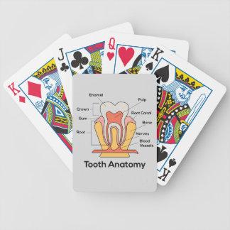 Zahn-Anatomie-Diagramm Bicycle Spielkarten