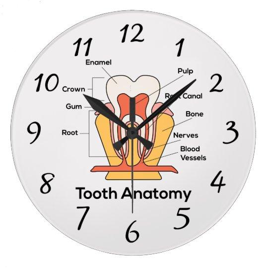 Zahn-Anatomie-Diagramm Große Wanduhr | Zazzle
