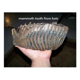 Zahn, Mammutzahn vom kotz Postkarte
