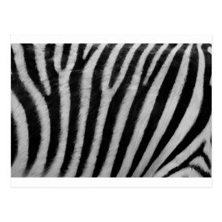 Zebra-Beschaffenheit Postkarte