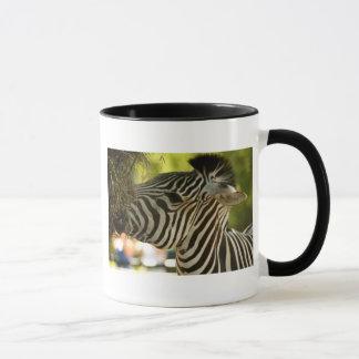Zebra, der Tasse isst