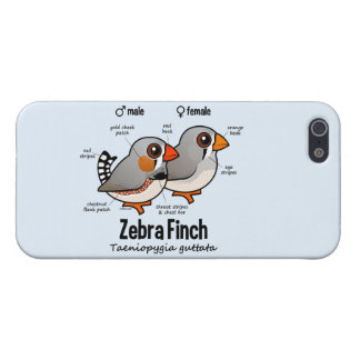 Zebra-Fink-Statistiken iPhone 5 Cover