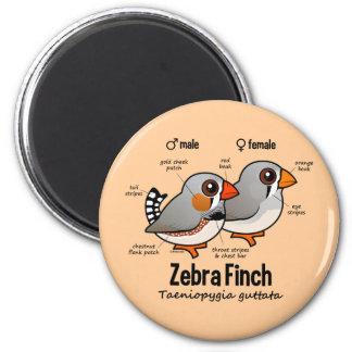 Zebra-Fink-Statistiken Runder Magnet 5,1 Cm