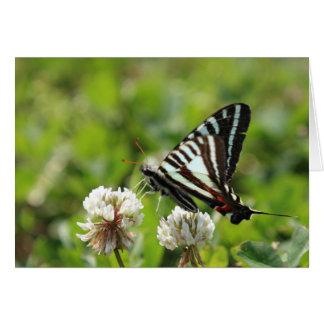 Zebra-Frack-Schmetterling Karte