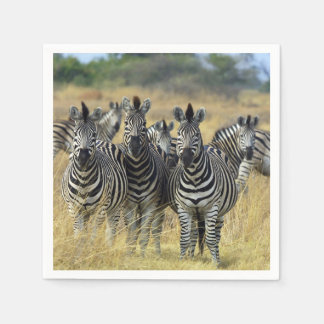 Zebra-Herde Serviette