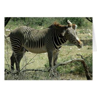 Zebra in der Bewegung Karte