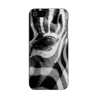 Zebra-lautes Summen Incipio Feather® Shine iPhone 5 Hülle