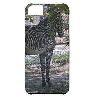 Zebra-Liebe iPhone 5C Hülle