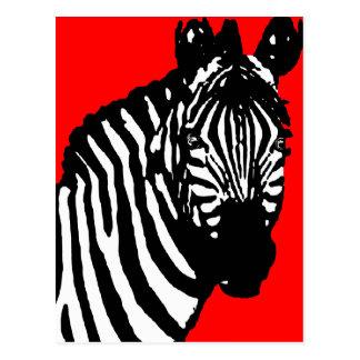 Zebra. Postkarten
