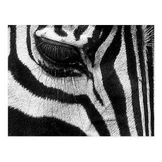 Zebra-Streifen Postkarte