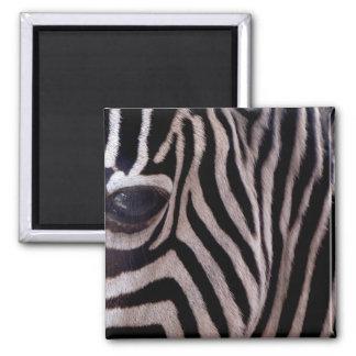 Zebra-Streifen Quadratischer Magnet