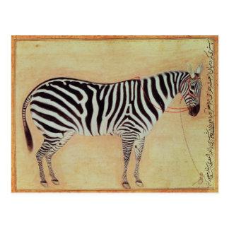"Zebra, vom ""Minto Album"", Mughal, 1621, Postkarte"