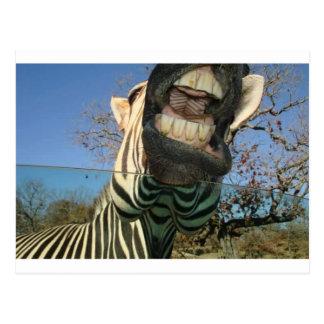 Zebra-Zähne Postkarte