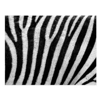 Zebrahautbeschaffenheit Postkarten