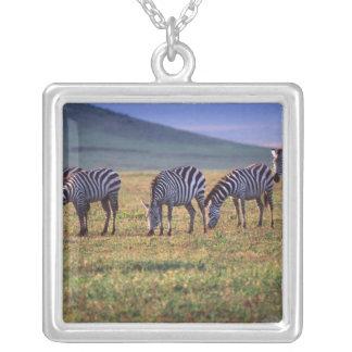 Zebras auf den Serengetti Ebenen am Sonnenaufgang, Versilberte Kette