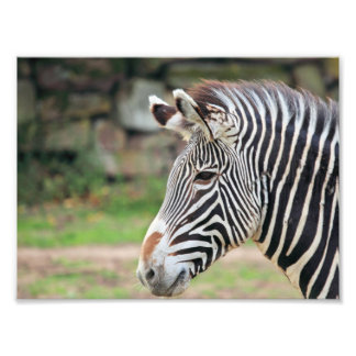 Zebratier Kunstfotos