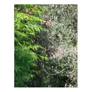 Zeder und rosa Hartriegel Postkarte