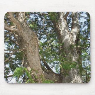 Zedern-Baum-Stamm in Sun Mousepad