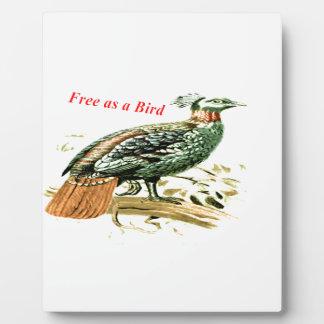 Zeichnen des Fasans frei als Vogel Fotoplatte
