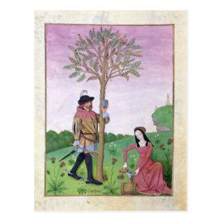 Zeichnen des Safts von einem Baum Postkarte